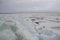 Граница льда за сутки не сместилась