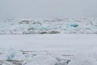 Продвижение ледохода замедлилось