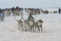 В Дудинке отпразднуют юбилейный День оленевода